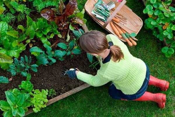 Какие работы в саду проводить в июне, как ухаживать за садом