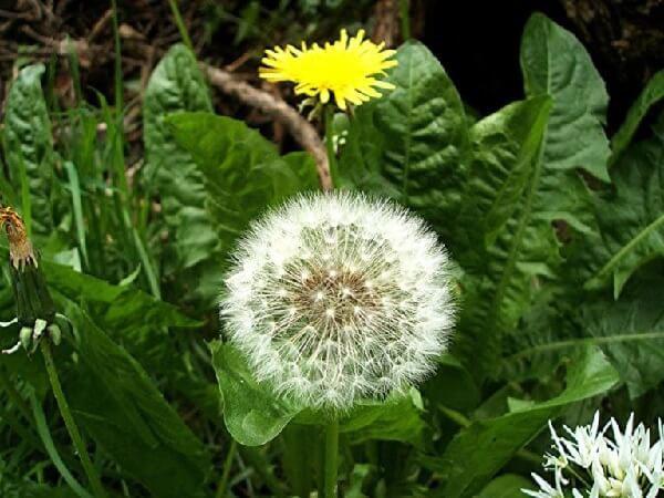 Лекарственные травы: союзники или враги?