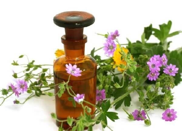 Травы для кожи – ТОП-5 для решения проблем и рецепты