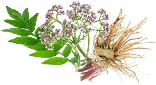 Травы от головной боли – список и рецепты применения