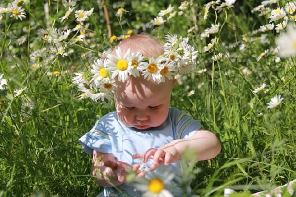 Лекарственные растения для детей – описание и фото