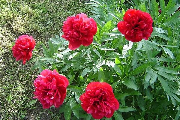 Травы от бессонницы и ТОП-10 рецептов для крепкого сна