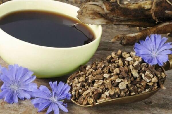 Цикорий дикий – описание, польза и вред, рецепты, отзывы