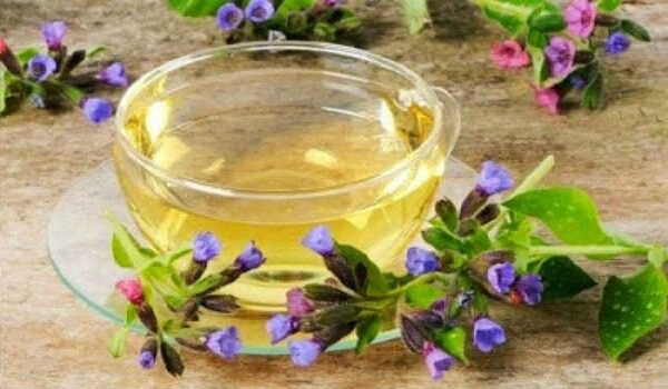 Медуница лекарственная – описание, польза и вред, рецепты, отзывы