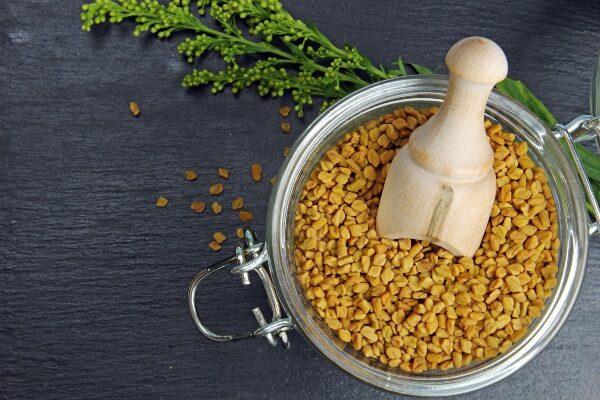 Пажитник сенной – описание, польза и вред, рецепты, отзывы