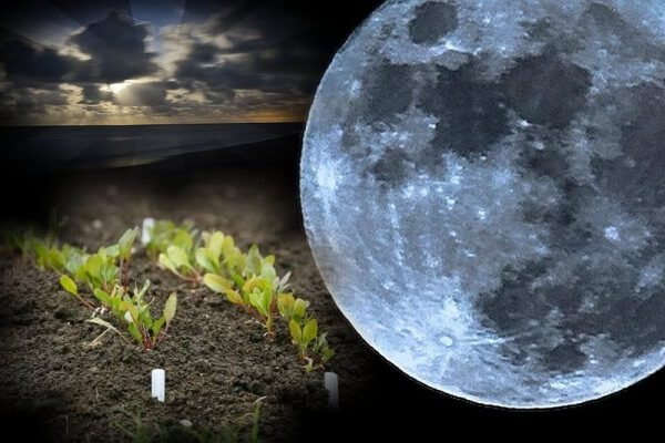 Лунный календарь 2018 для огородника и садовода