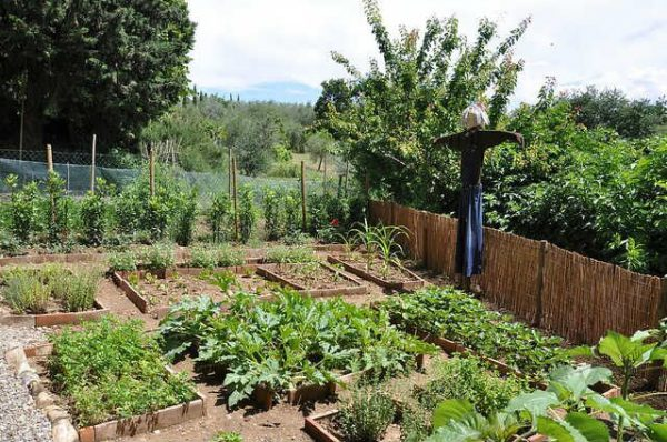 Народные советы садоводу и огороднику
