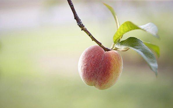 Весенняя обрезка персика