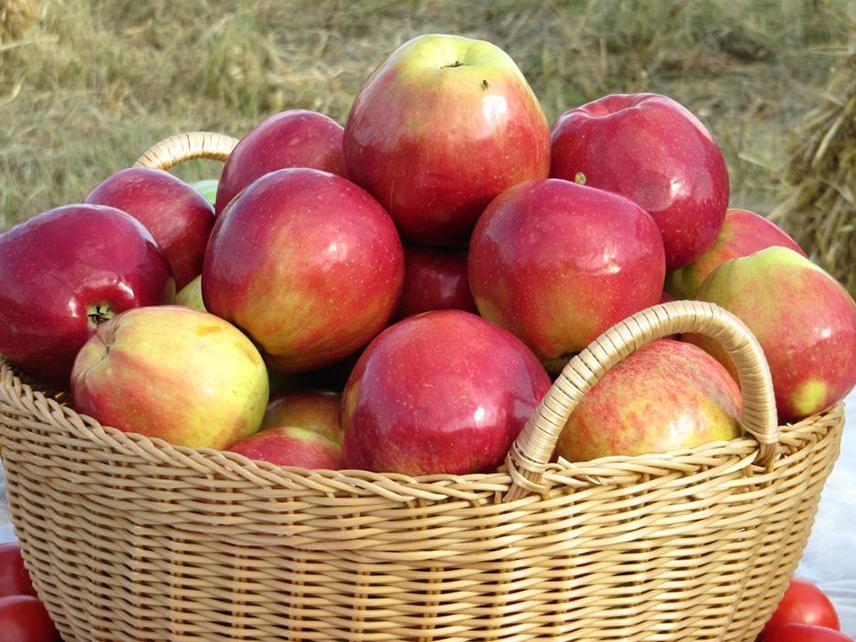 Как сохранить яблоки на зиму в погребе?