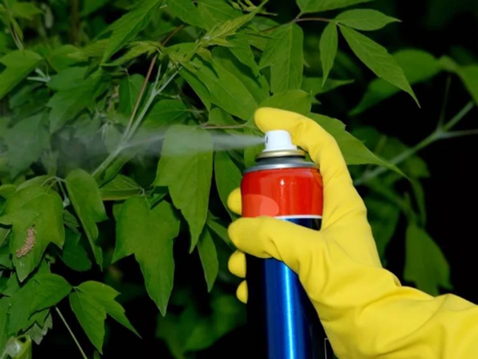 Чем полить дерево чтобы оно засохло