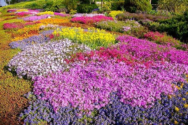 Почвопокровные многолетние растения: каталог названий цветов