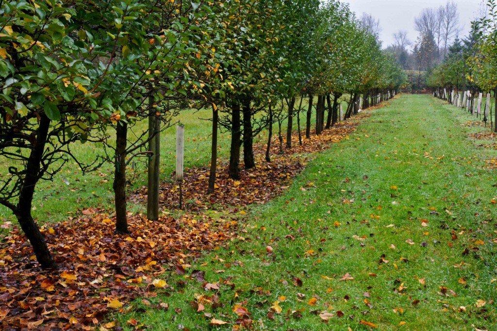 Чем удобрять плодовые деревья осенью