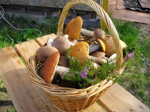 Как сеять грибы на даче