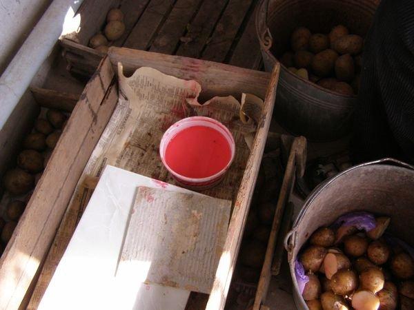 Подготовка картофеля к посадке и его обработка от болезней и вредителей