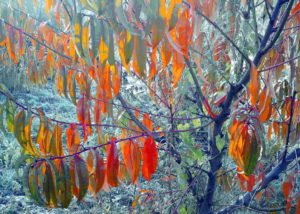 Уход за персиком осенью и подготовка к зиме