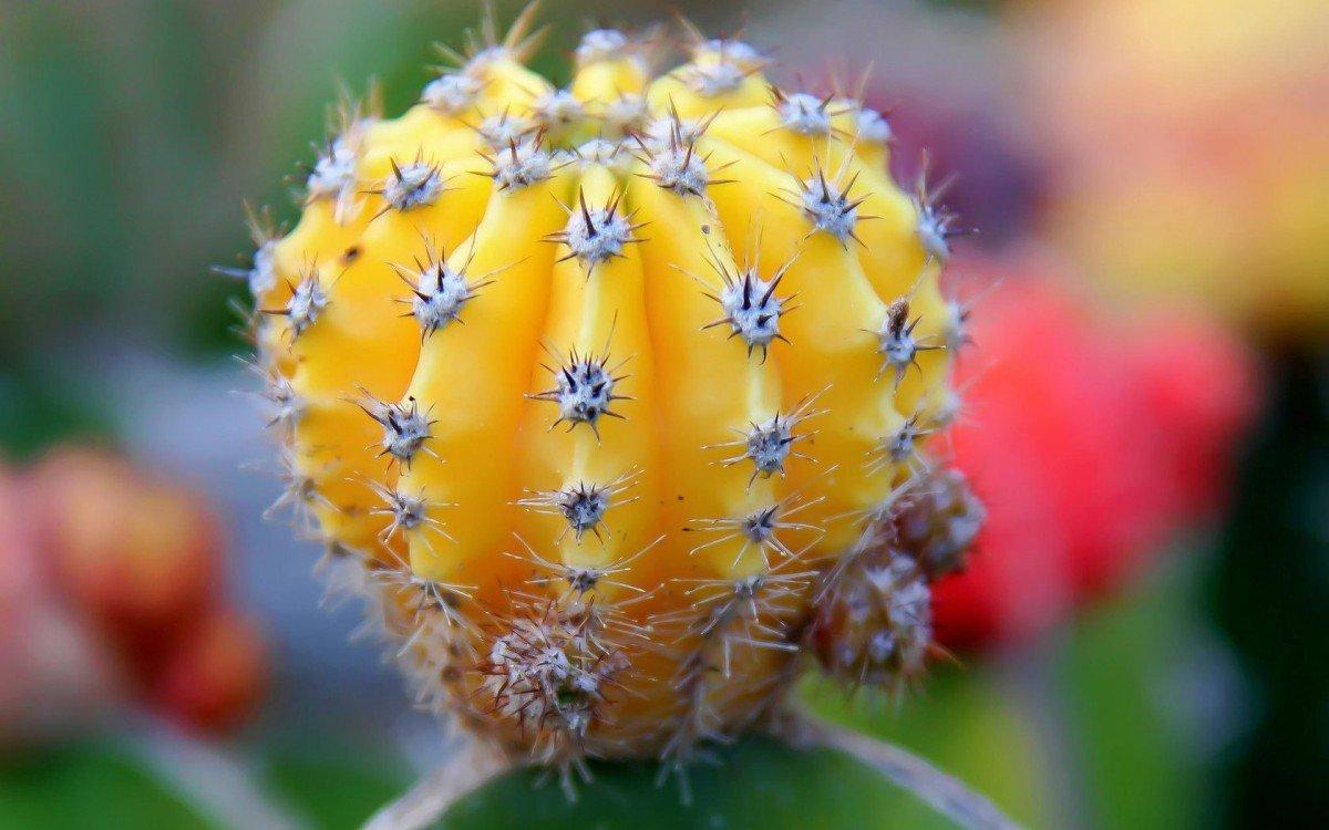 Разновидности кактусов фото и названия