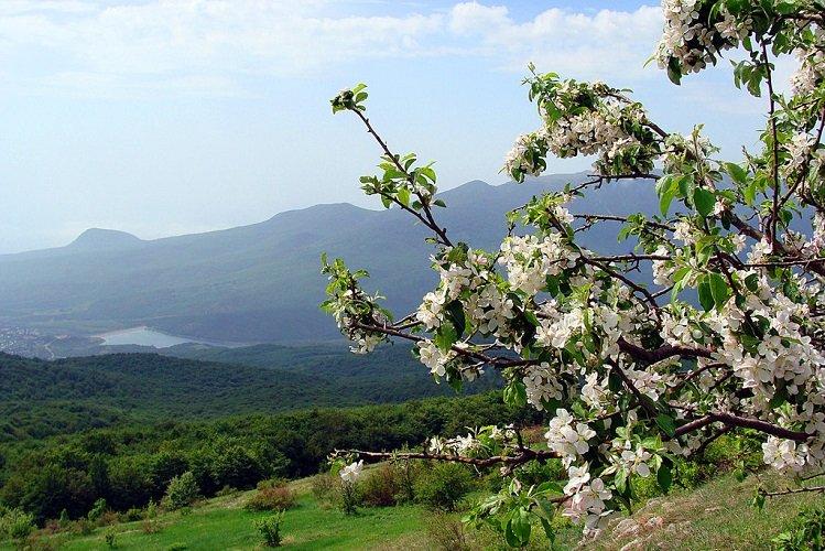 Чем подкормить грушу весной