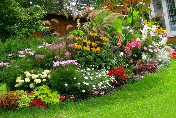 Многолетники для сада, цветущие всё лето: названия и фото цветов для летних клумб