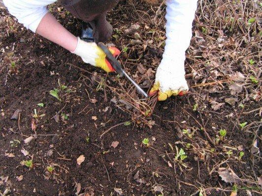Как ухаживать за клубникой весной, чтобы был хороший урожай