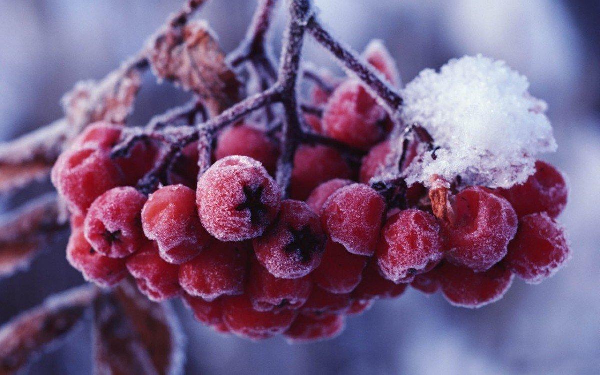 Лунный посевной календарь на ноябрь 2018 года садовода и огородника
