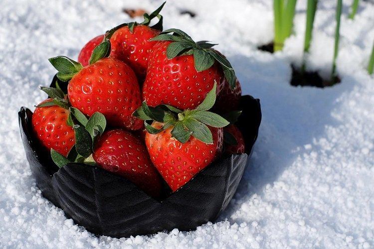 Как подготовить клубнику к зиме