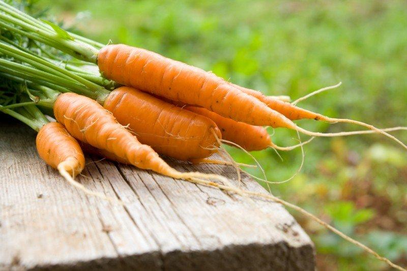 Чем подкормить землю осенью под морковь
