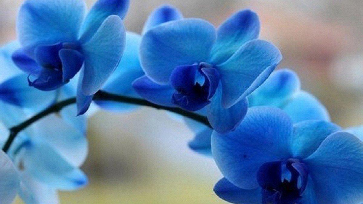 Орхидея уход в домашних условиях после покупки