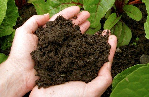 Чем удобрить землю весной если нет навоза