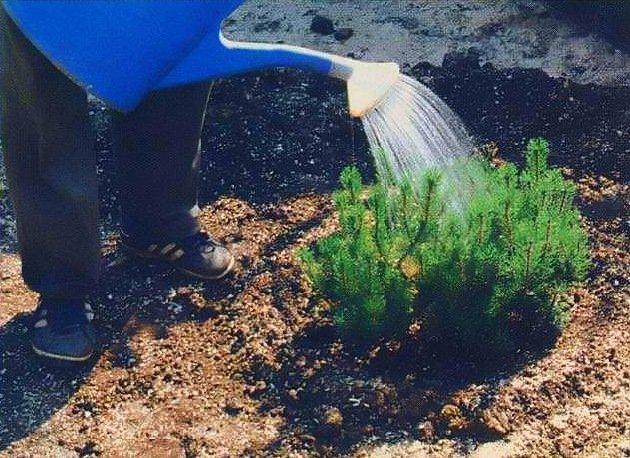 Почва для выращивания туй 47