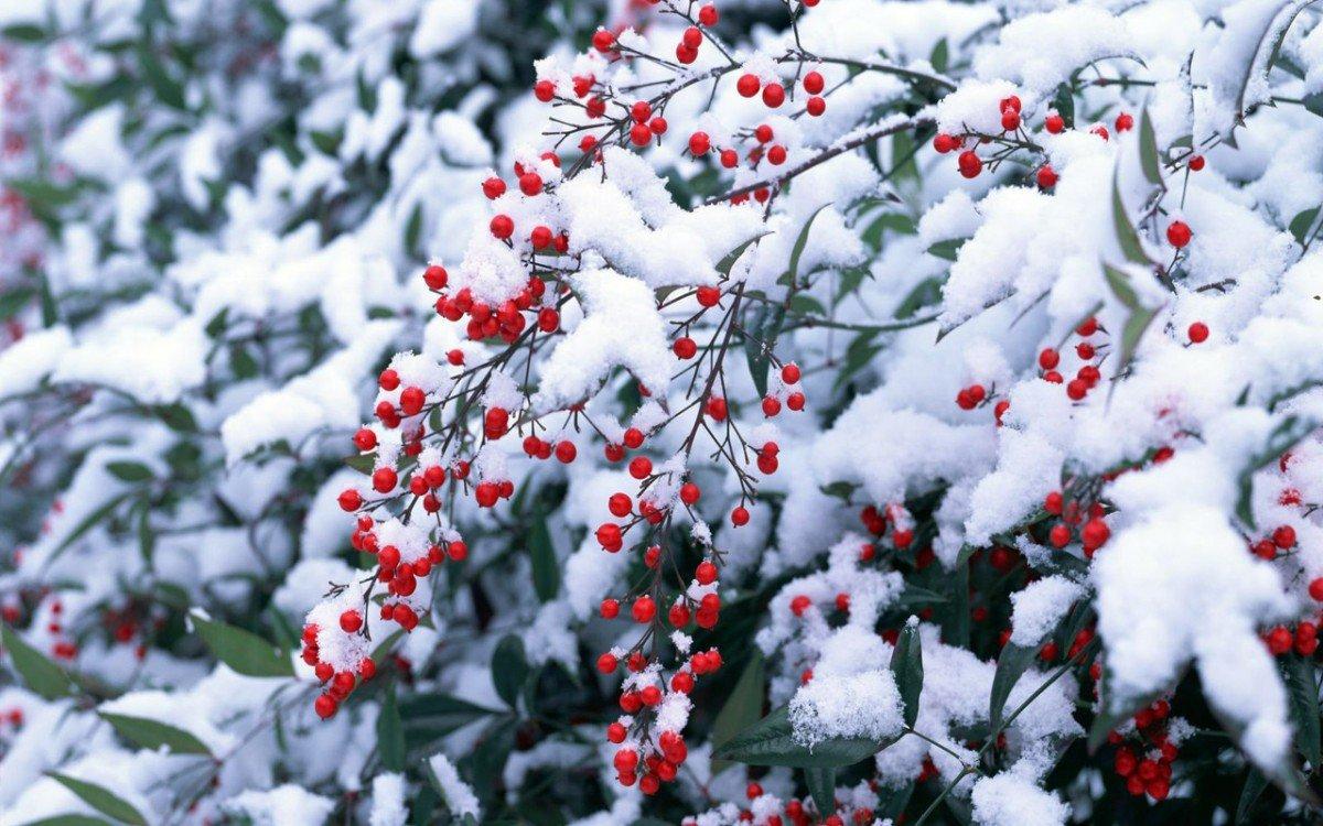 Лунный посевной календарь на декабрь 2018 года садовода и огородника