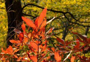Уход за рододендронами осенью и подготовка к зиме