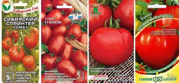 Томаты (помидоры) в теплице из поликарбоната. Посадка, уход и формирование куста