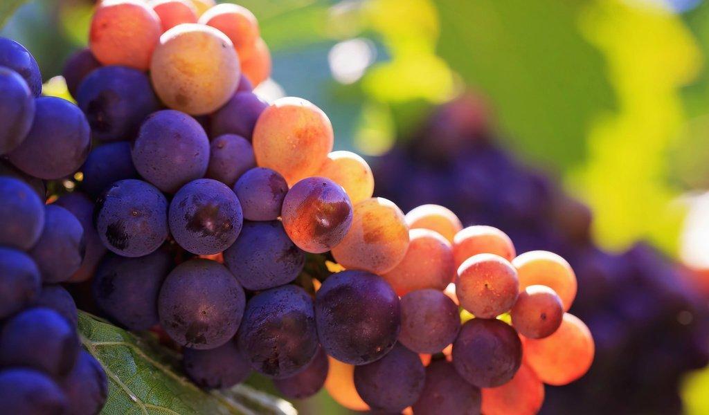 Как прищипывать виноград видео
