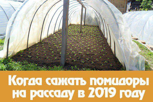 Посадка томатов на рассаду в 2019 году по лунному календарю