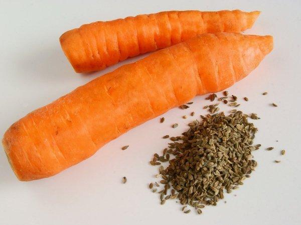 Обработка семян моркови перед посадкой для быстрых всходов