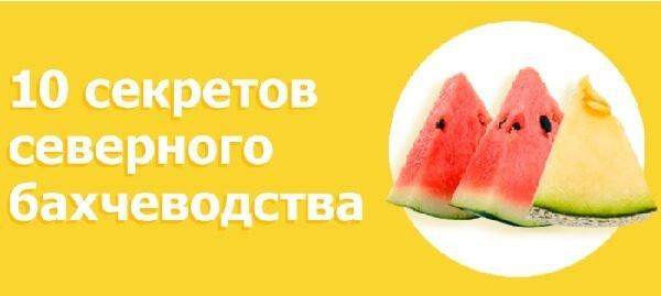 Выращивание арбузов и дынь на Урале и в Сибири пошагово.