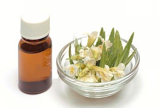 Авран лекарственный – описание, польза и вред, рецепты, отзывы