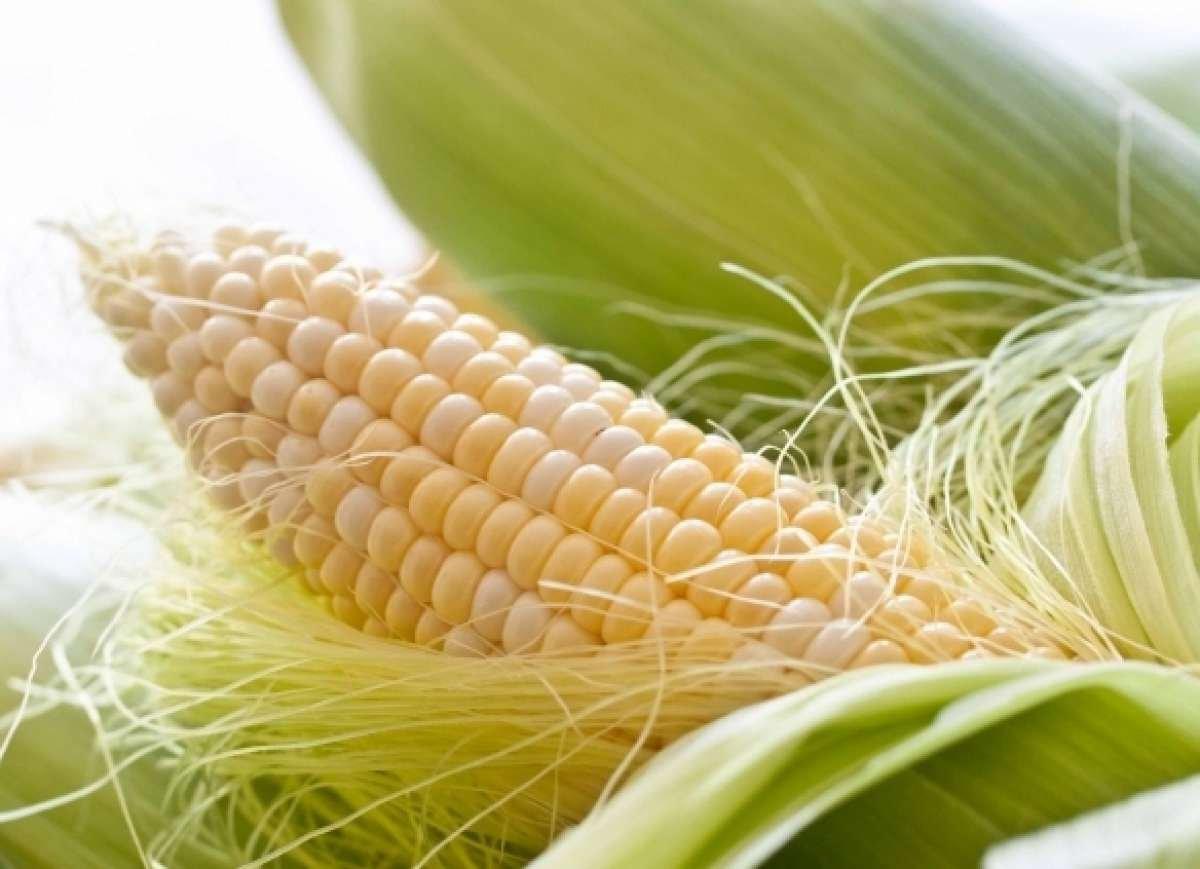 Посадка кукурузы семенами в открытый грунт