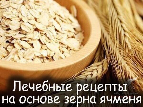 Ячмень – описание, польза и вред, рецепты, отзывы