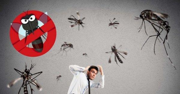 Как избавиться от комаров в квартире, на природе - лучшие средства