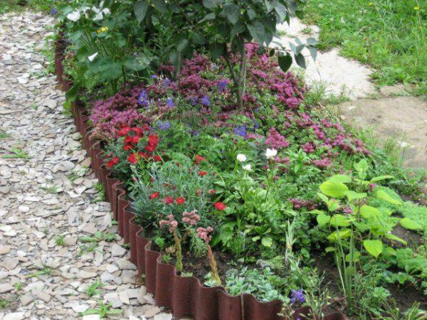 Полезные травы с грядки и их свойства