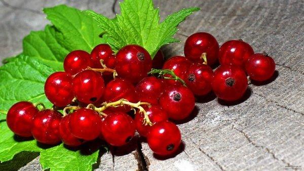 Болезни красной смородины красные пятна на листьях