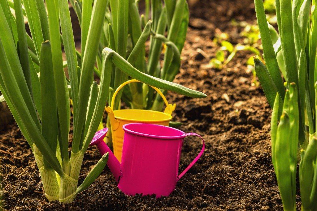Чем обработать лук от болезней и вредителей