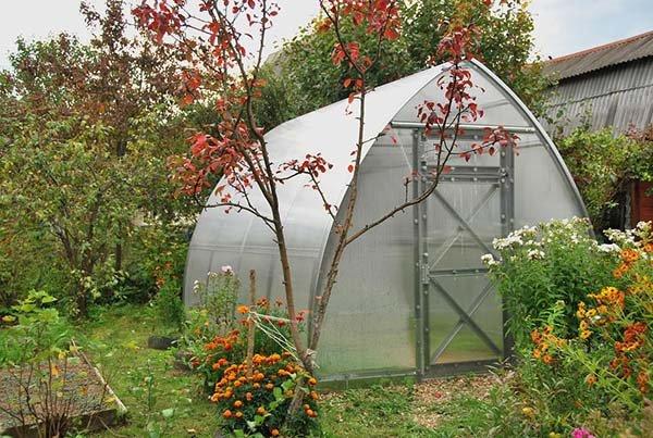 Осенняя обработка теплицы после сбора урожая подготовка почвы к новому сезону