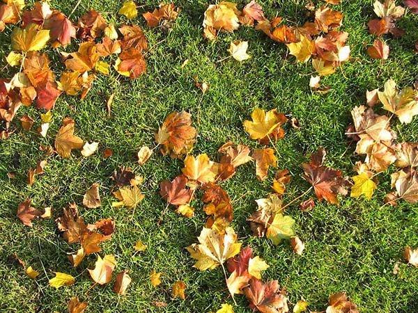 Уход за газоном осенью и его подготовка к зиме стрижка, аэрация, подкормка