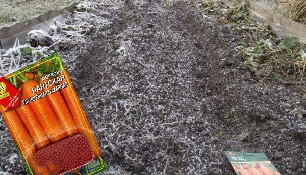 Когда и как правильно сеять морковь осенью под зиму оптимальные сроки и правила посадки