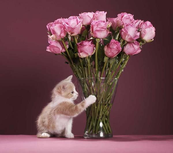Как сохранить розы в вазе дольше всего в какую воду ставить, что в нее добавить