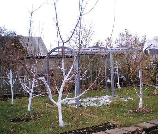 Осенняя обработка яблонь от болезней и вредителей чем и когда опрыскивать плодовые деревья в саду
