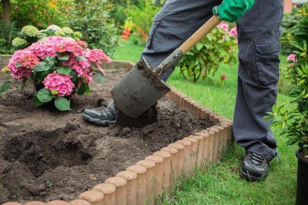 Как сажать гортензию осенью в открытый грунт правила ухода и выращивания
