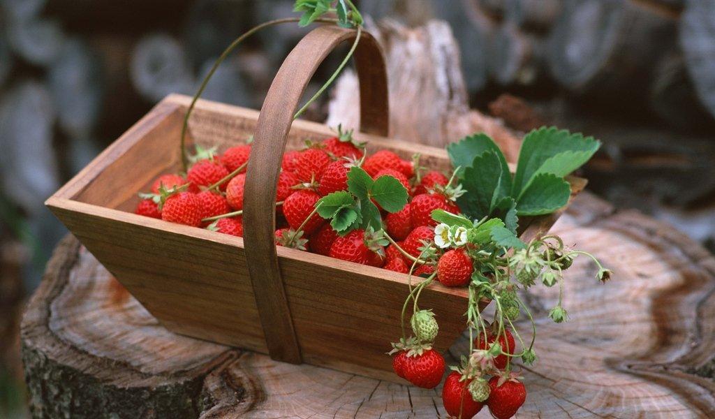 Подкормка клубники после сбора урожая чем подкармливать